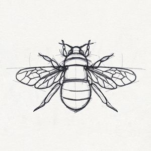 Anatomical Drawing Of Bee Sketch Art Line