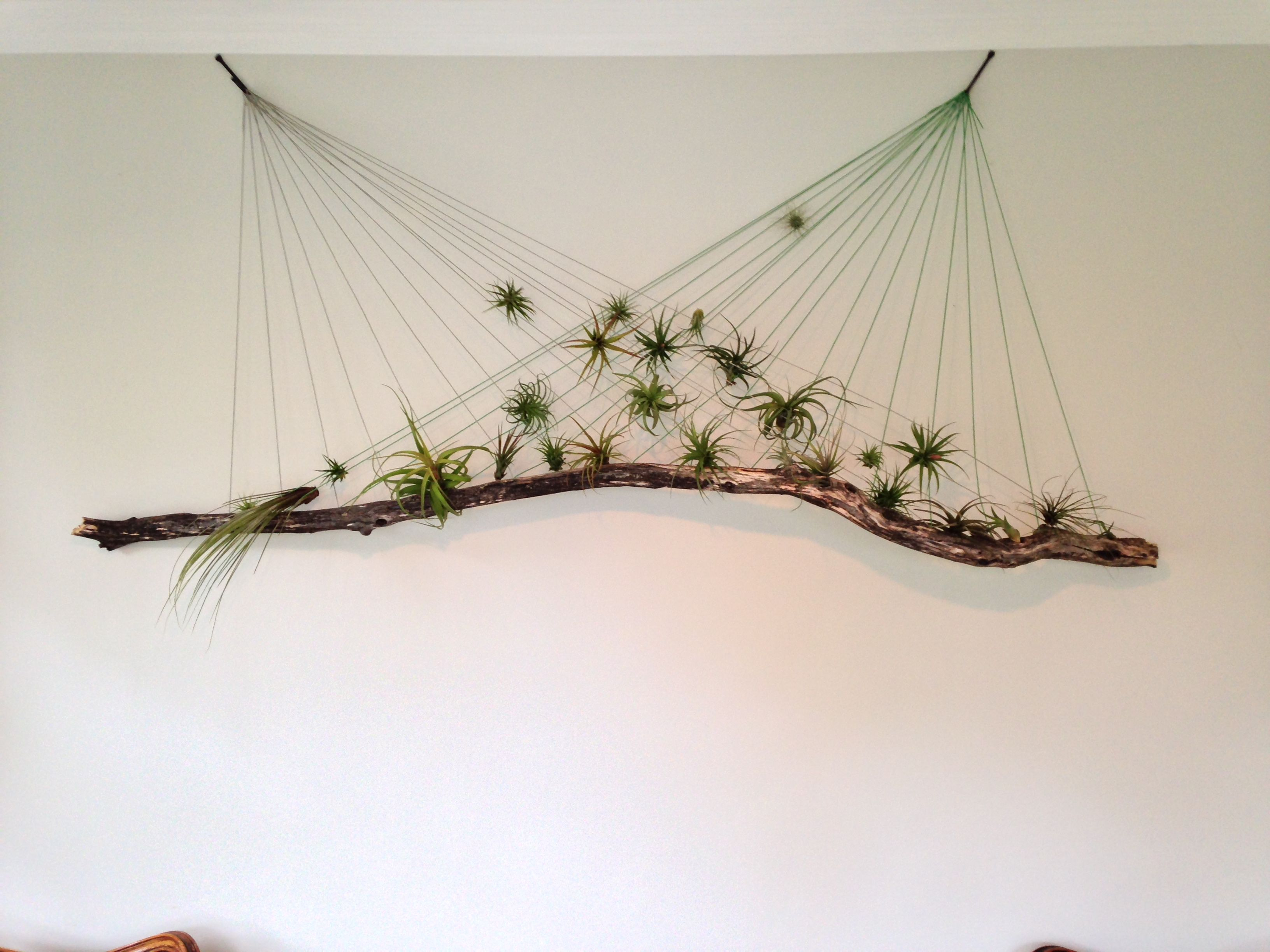 Air plant wall hanging air plants plants and gardens for Air plant wall art