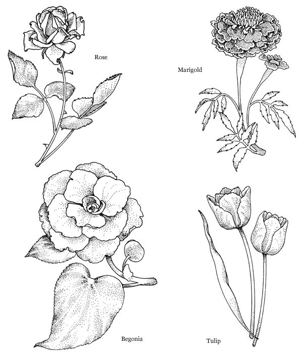 Welcome To Dover Publications With Images Floral Drawing