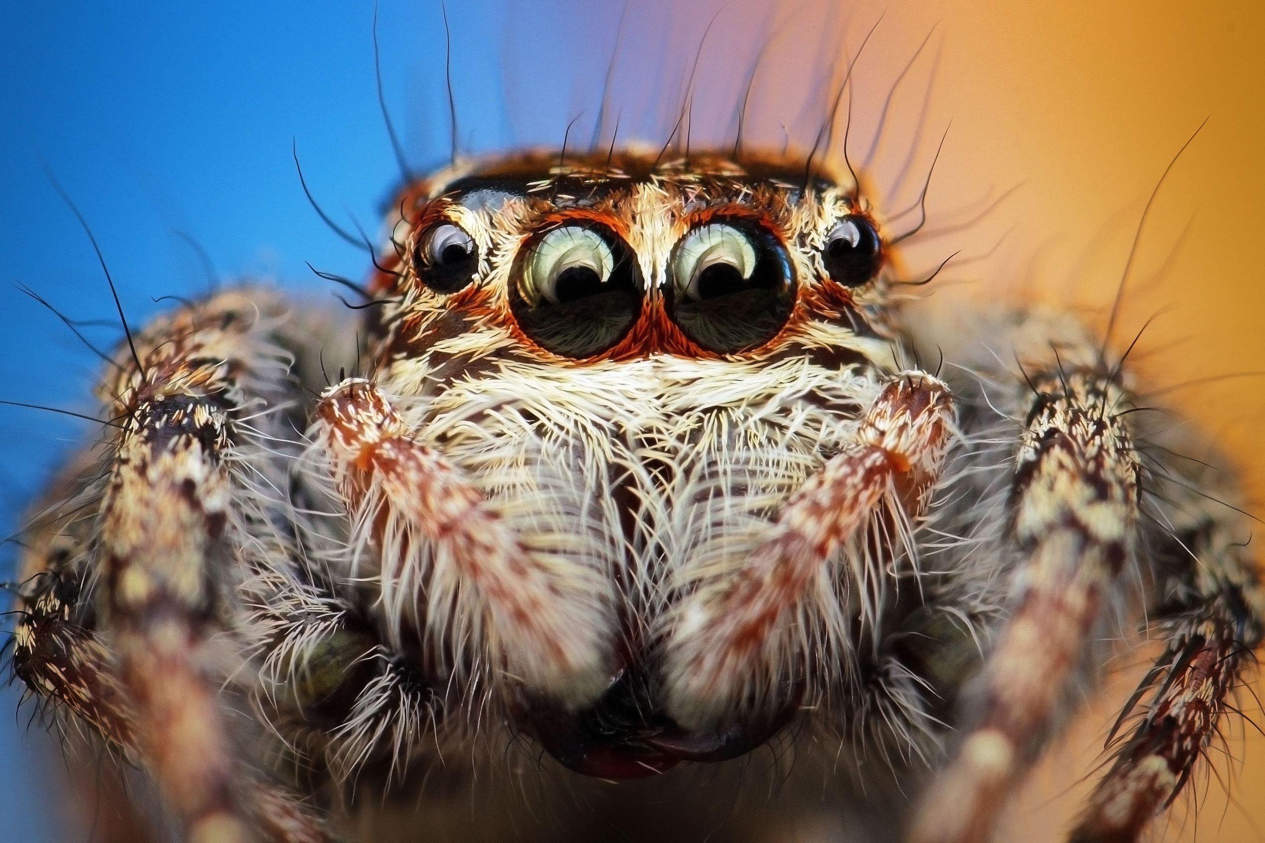 Картинки глаза пауков
