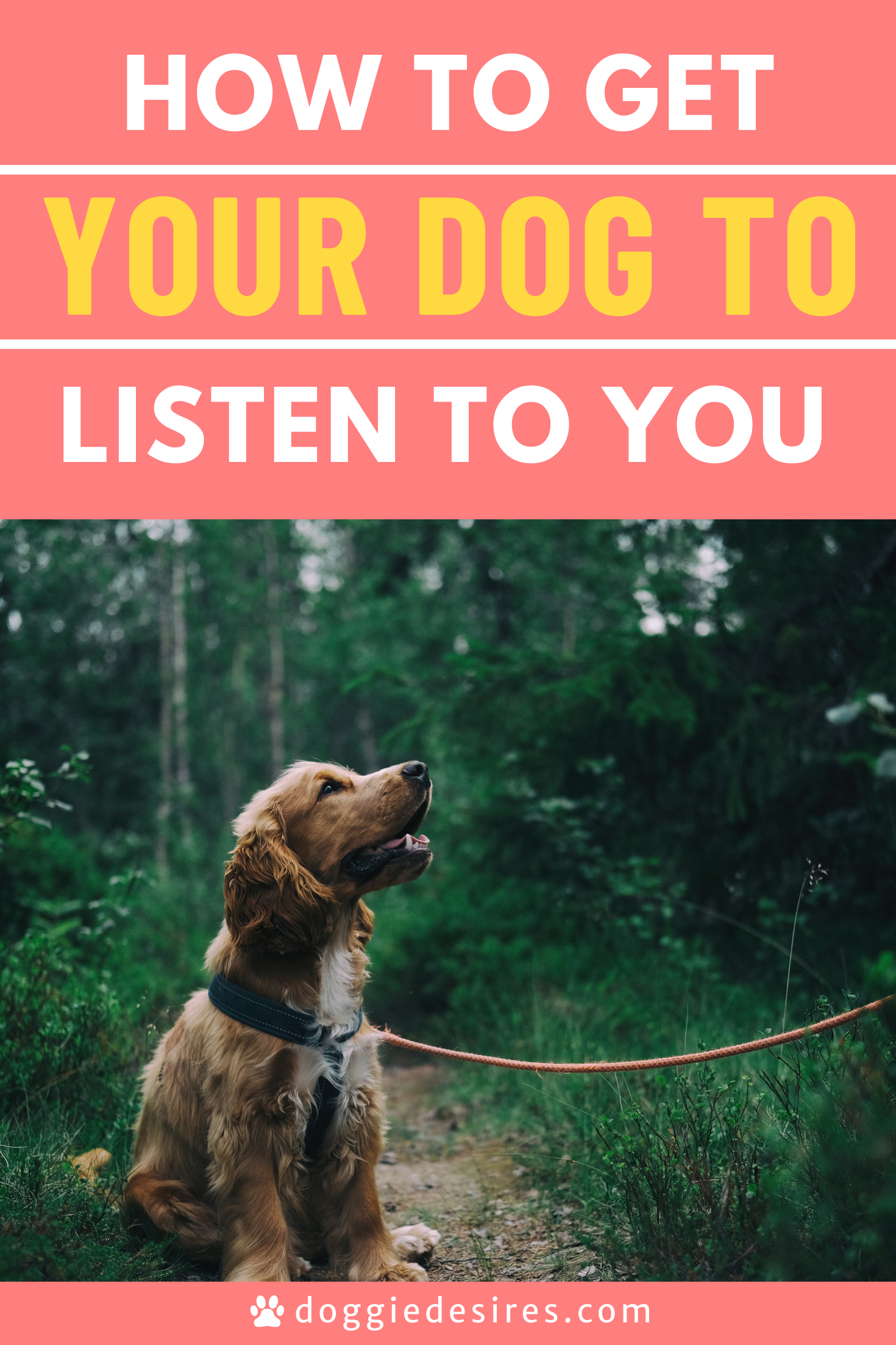 Training Your Dog To Listen To You Doggie Desires In 2021 Training Your Dog Dogs Best Dog Training