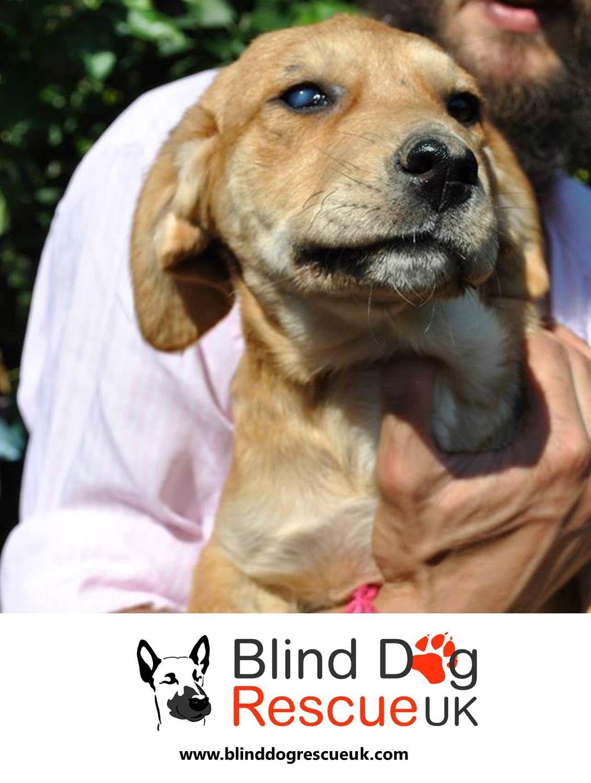 Adopt a blind dog with images dog rescue uk blind dog