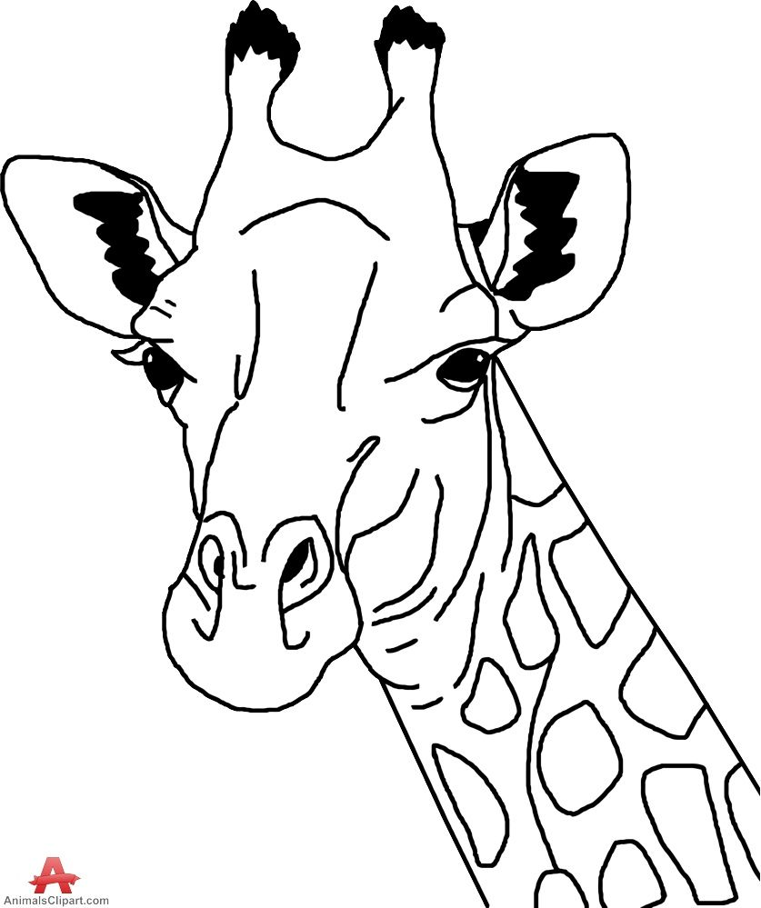 Giraffe Clipart Head And Neck Pencil And In Color Giraffe