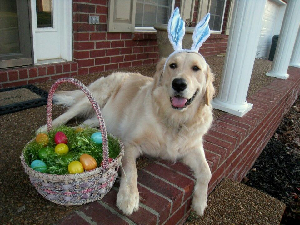 Easter puppy. Dog easter eggs, Dogs, Dog friends