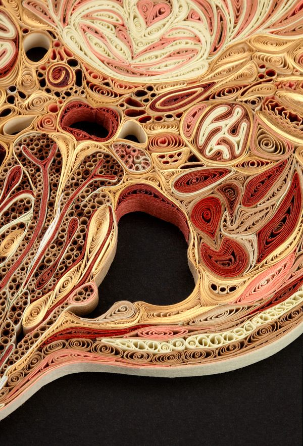 Anatomical Cross-Sections Made with Quilled Paper by Lisa Nilsson ...
