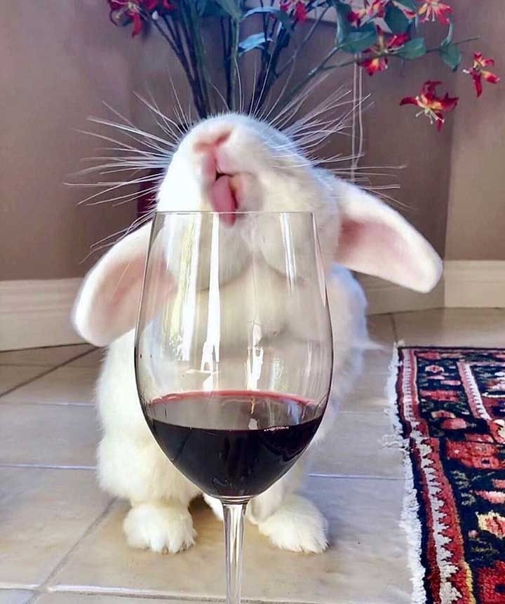 24 Cutest Animal Pictures Guaranteed to Make You Smile Today | Cute baby animals, Cute animals, Cute baby bunnies