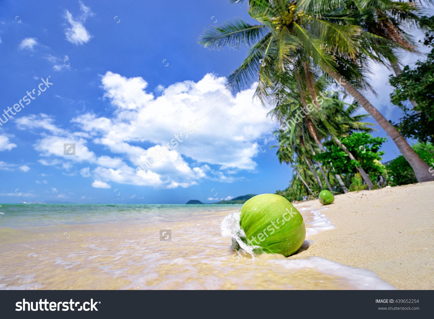 Tropical Paradise. Green Coconut On White Sand Beach With Palms. Стоковые…