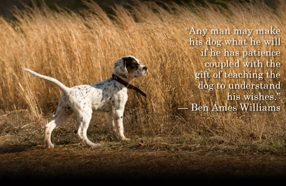 Dog Quote Pic Dogs Dog Quotes Bird Dogs