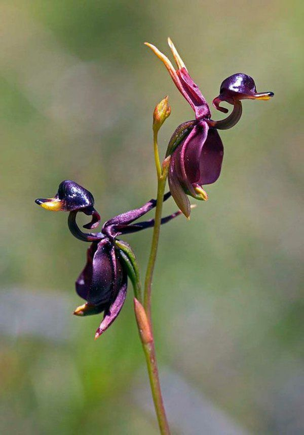 blumenarten tiere aussehen originell idee ballerina | orchideen, Hause und garten