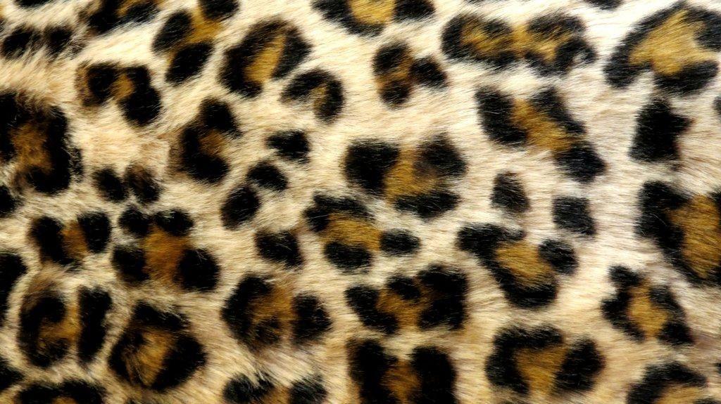 cheetah print wallpaper in 2019 | Leopard print wallpaper ...