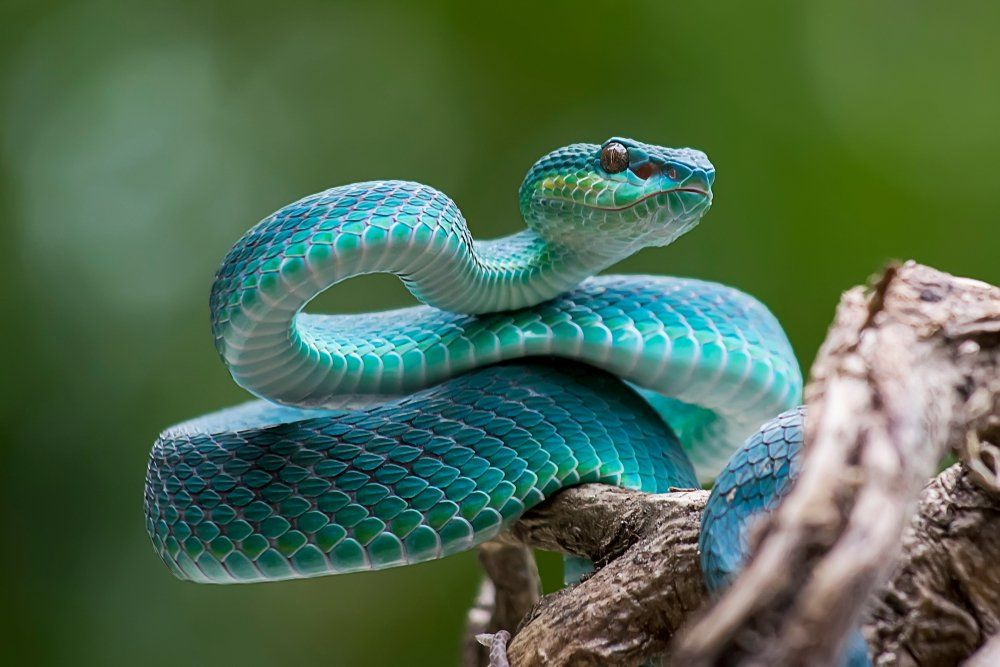 How to Avoid Snakes Slithering Up Your Toilet Poisonous