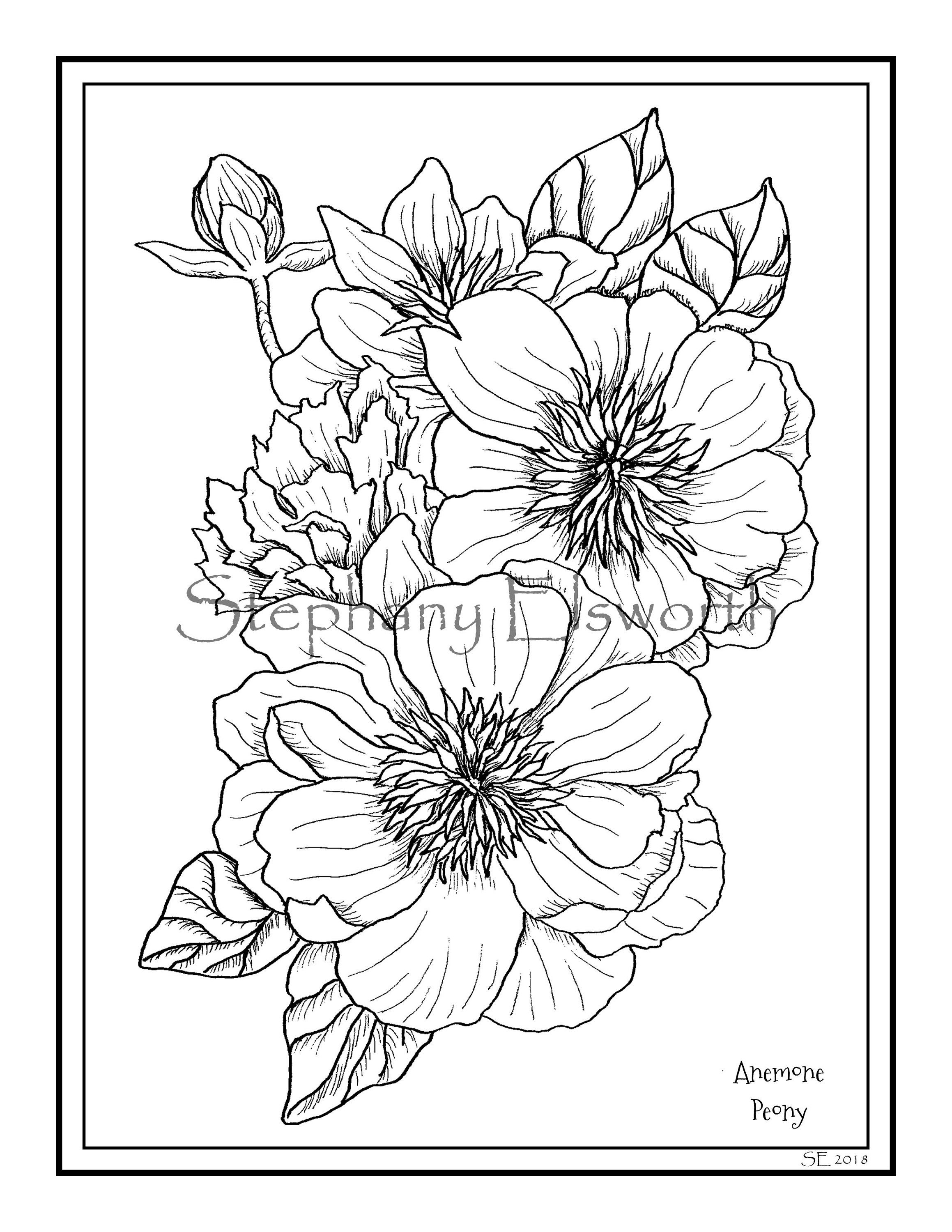 Anemone Peony 8 1 2 X 11 Pdf Printable Instant Download Coloring Page With Images Kolorowanki