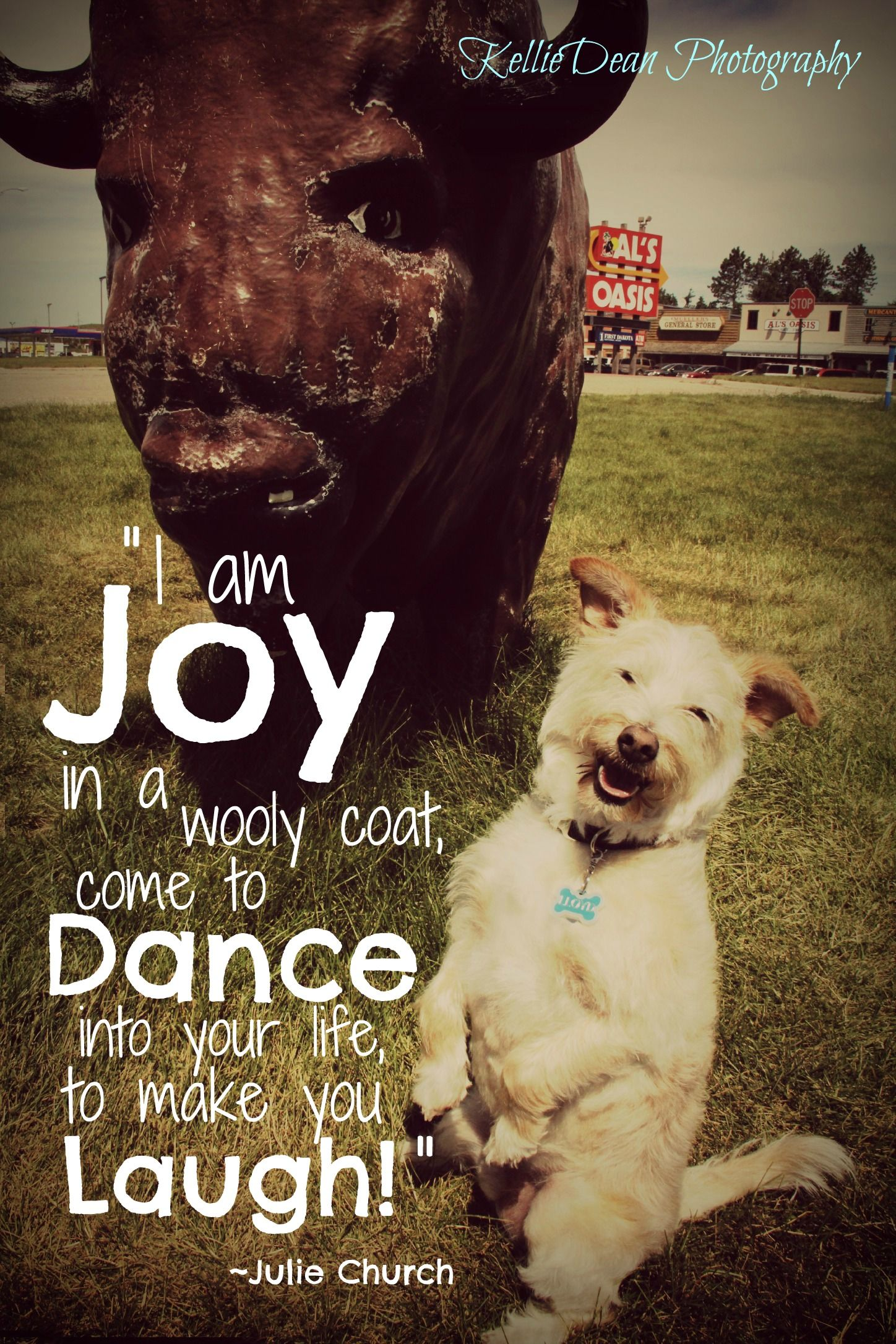 Dog Dogs Smile Quote Joy Pet Love Laugh Laughter Funny