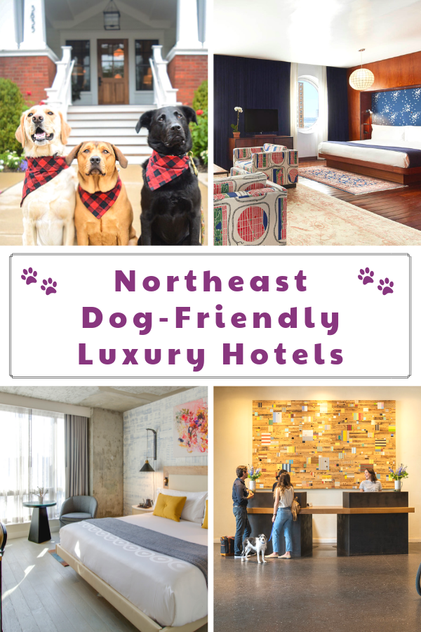 The Best Luxury Pet-Friendly Hotels in the Northeast ...
