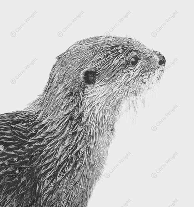 otter drawing | Otter Drawing Bankside | Tattoo Ideas ...