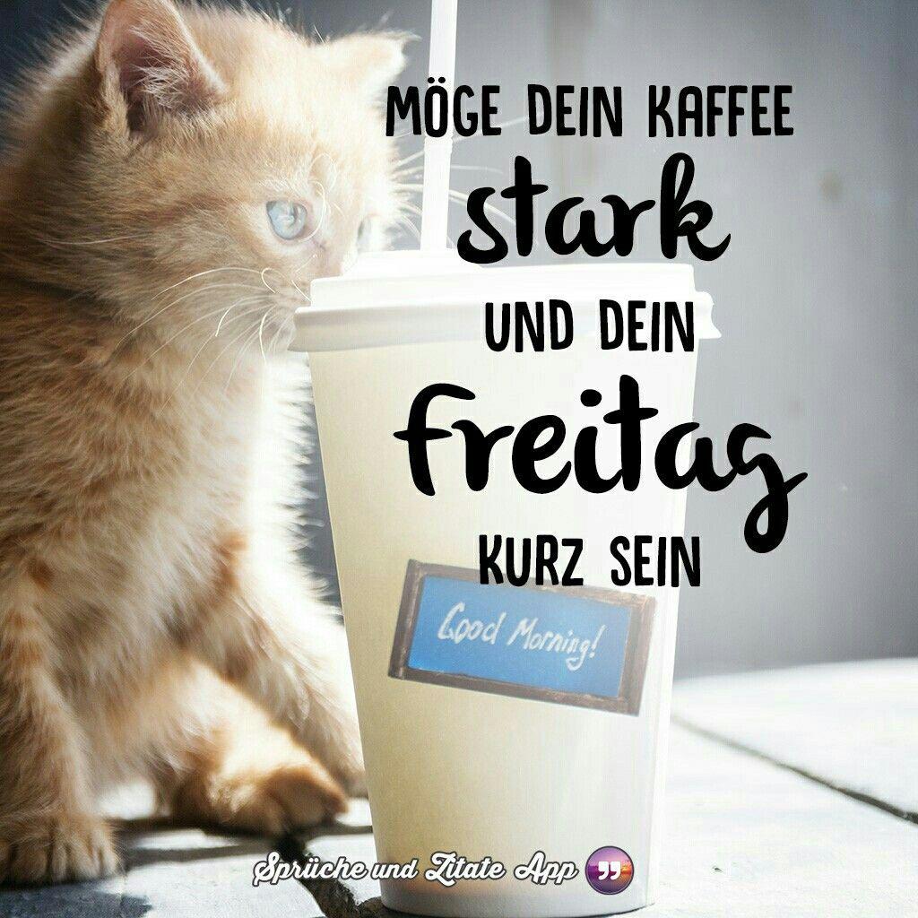 Hahaha Guten Morgen Freitag Freitag Katze Guten Morgen