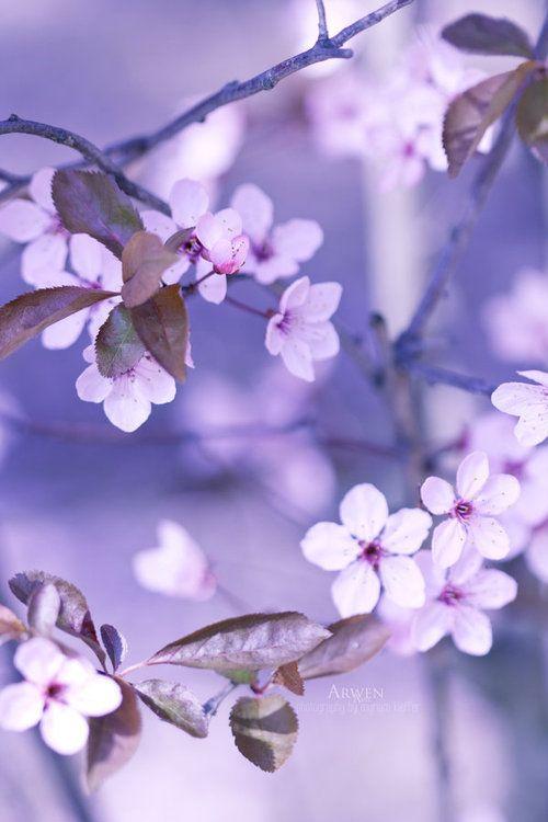 Cherry Blossom Tumblr Flower Oasis Pretty Flowers Beautiful Flowers