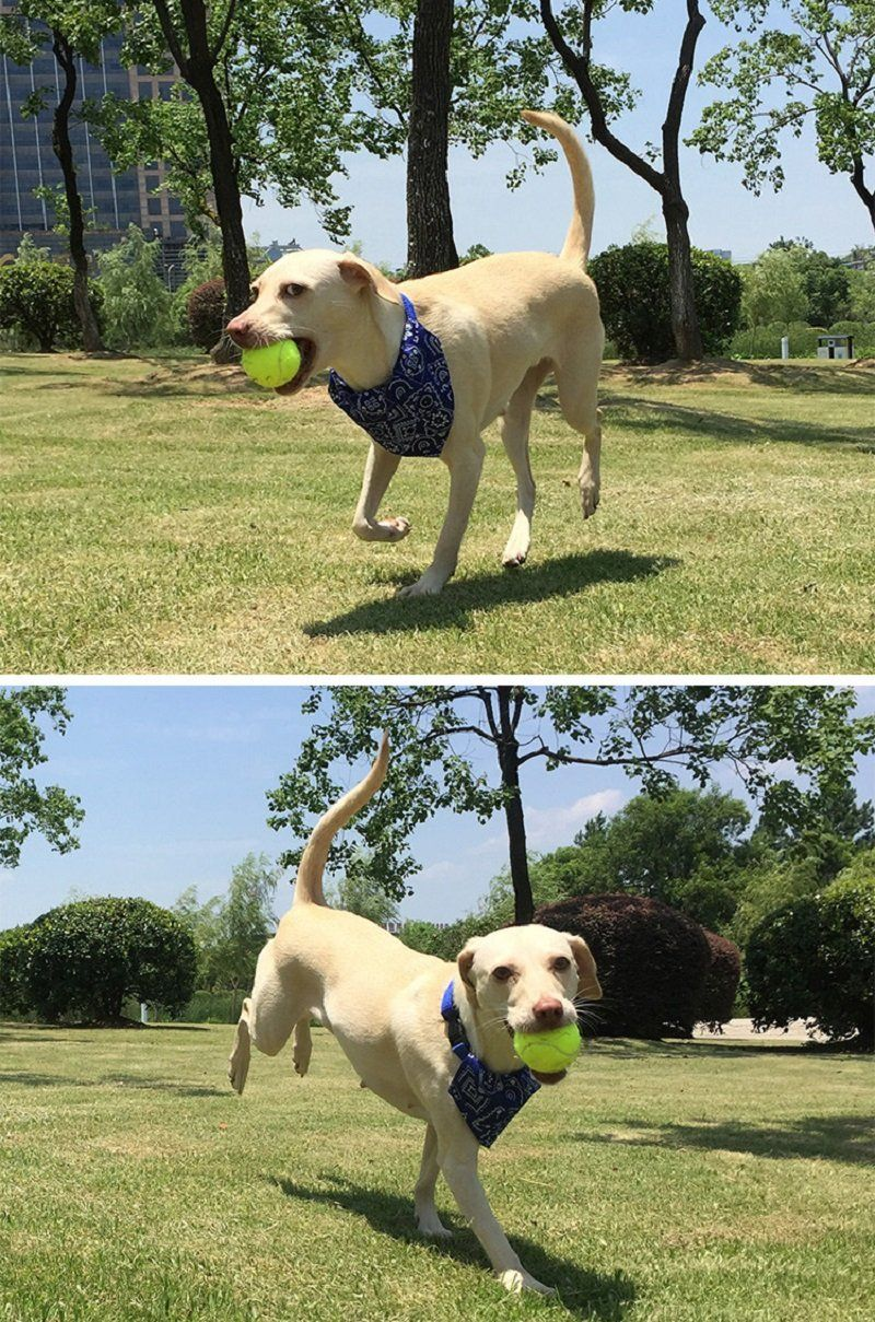 Stock Show 3pcs Pack 2 35 Pet Dogs Tennis Ball Treat Ball Toys For