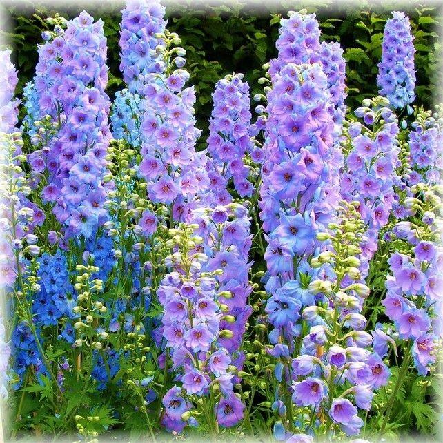 50% OFF - Delphinium Handmade Blank Photography Card Spring Flowers Floral B207 £1.00
