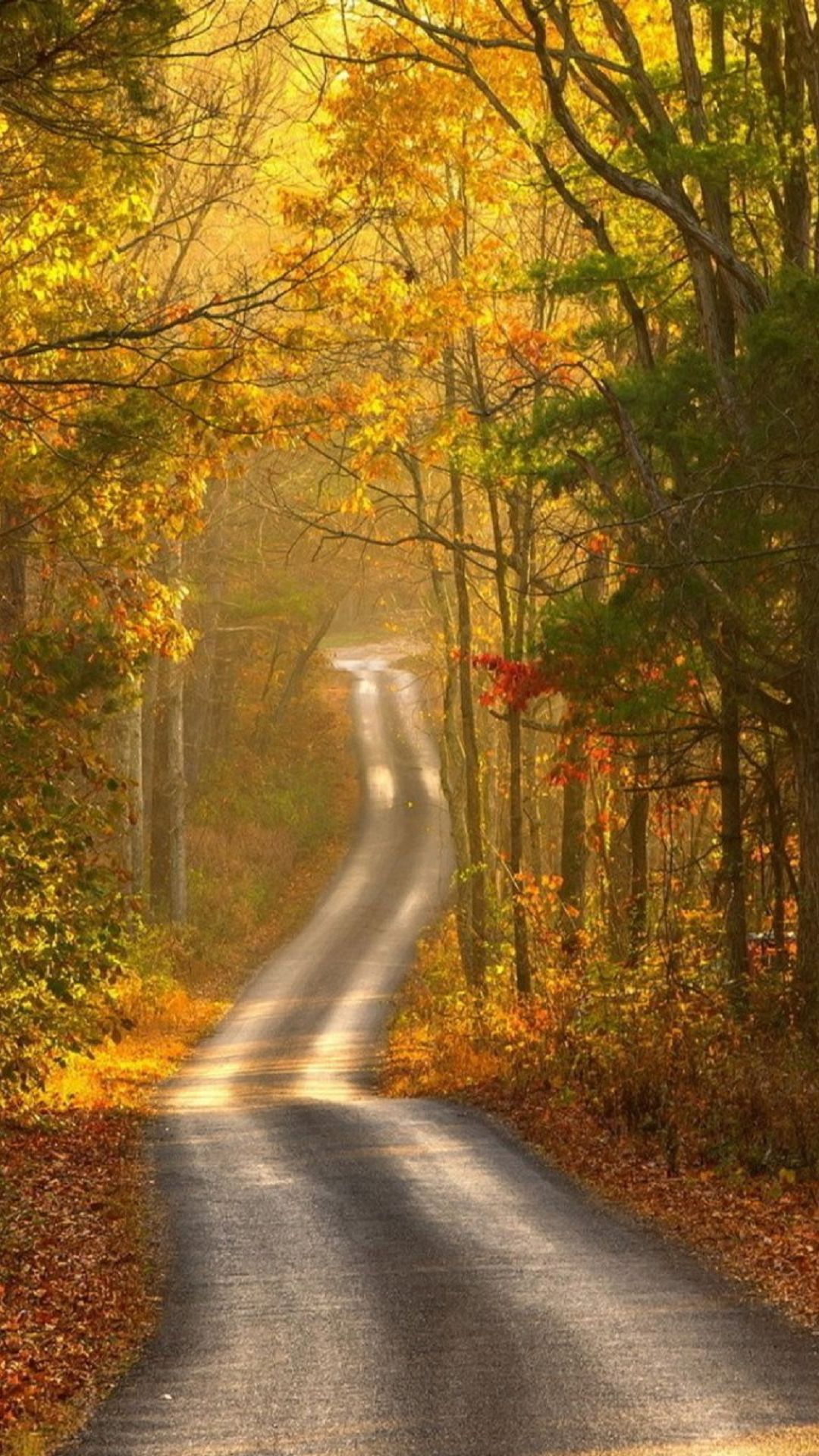 Upstate New York Fall Hd Wallpaper Forest Trail Road Path Scenic Dirt Pond Nature Swamp