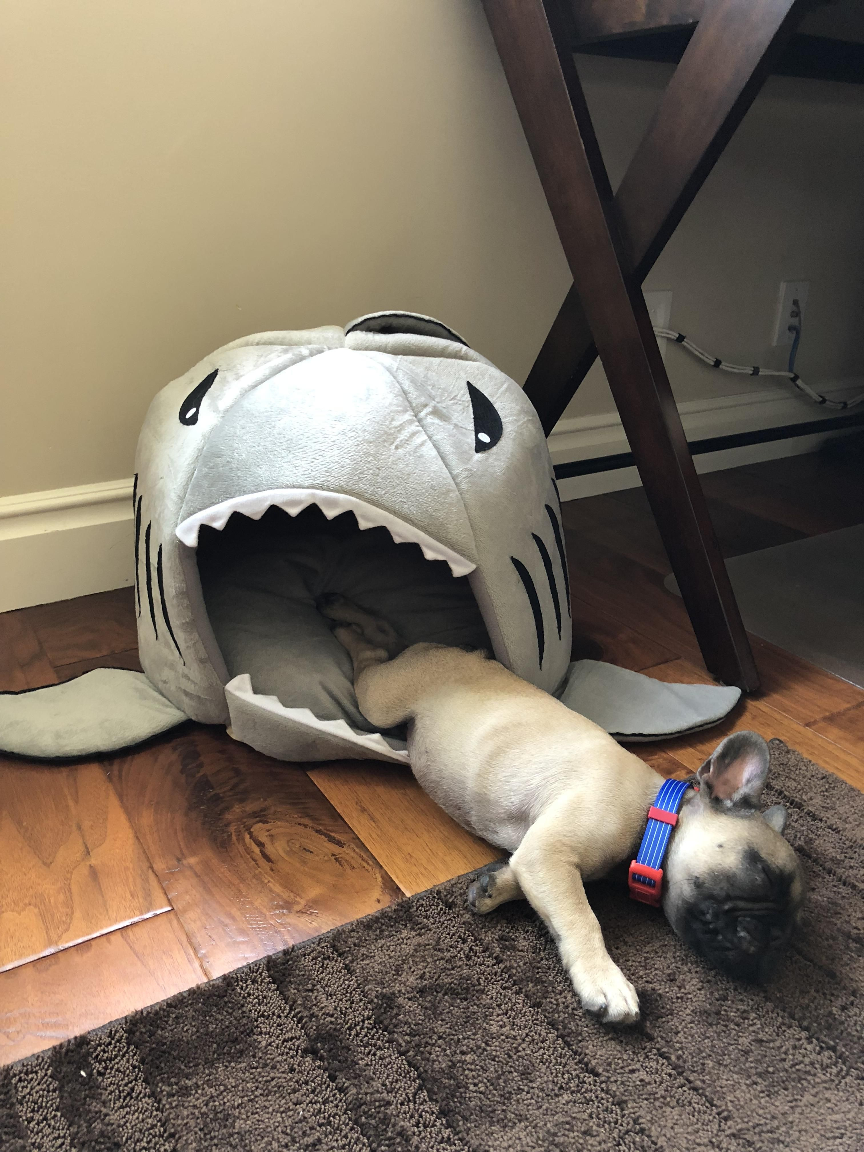 Hardcore henry barely survived shark attackiftpbqajv