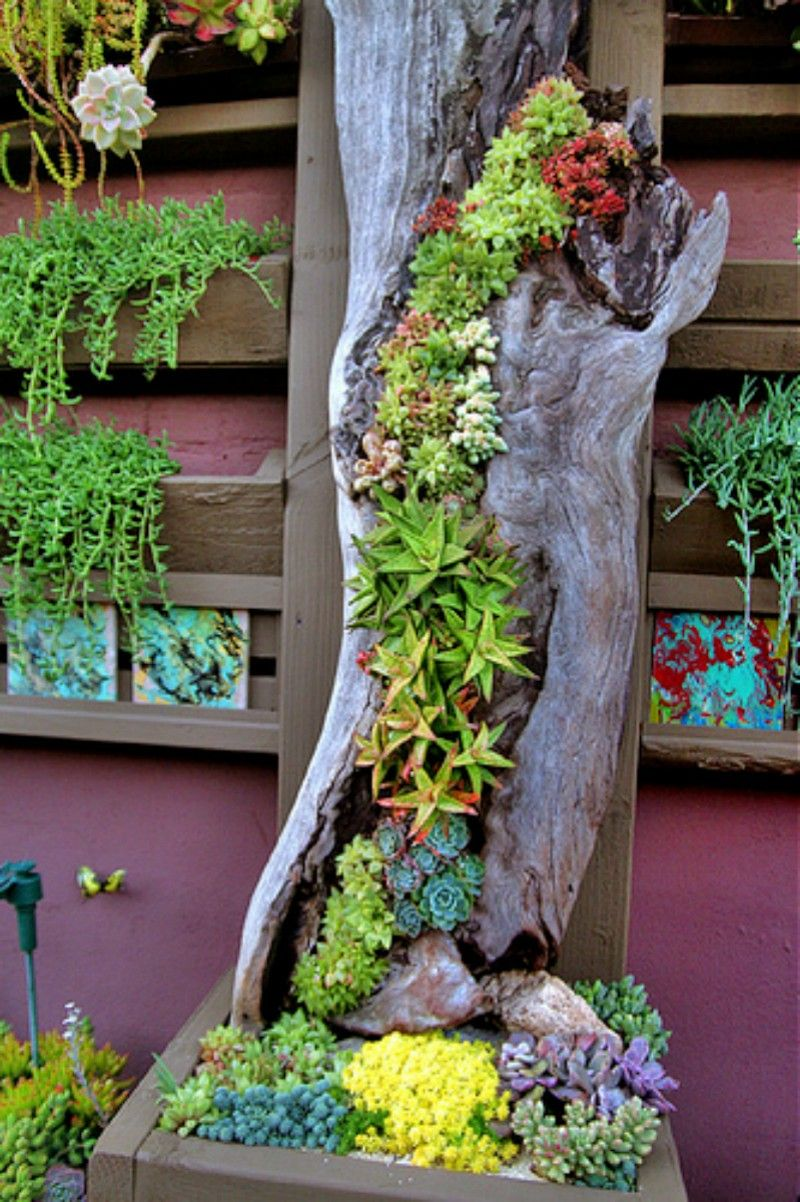 Succulent Planter At The Succulent Cafe Vertical Hollow Log