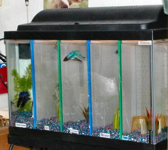 Tank divider betta fish pinterest for Fish tank divider