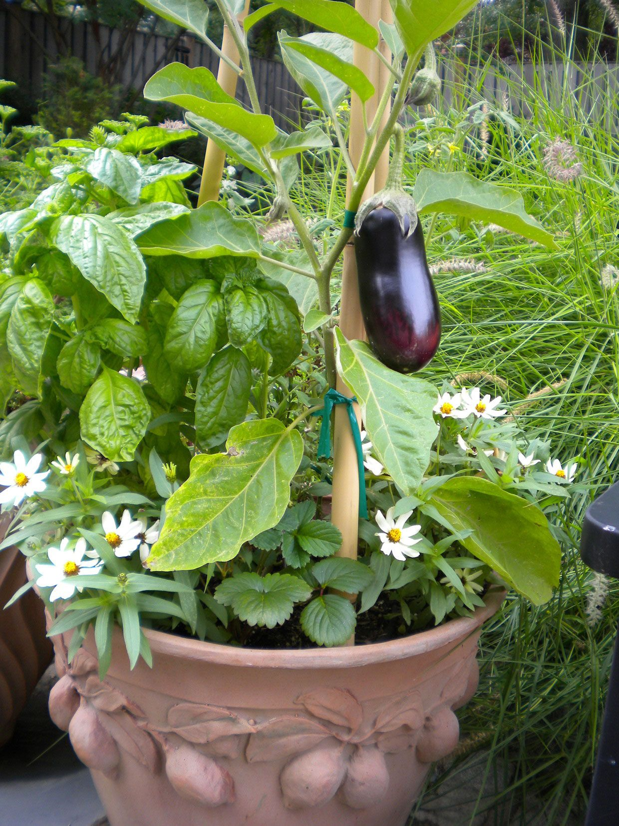 Potted Vegetable Garden Ideas Part - 37: Garden U0026 Landscaping, Inspiring Exterior Design With Container Gardening  Vegetables Of Eggplant In Ceramic Pot At Backyard ~ Creative Container  Vegetable ...