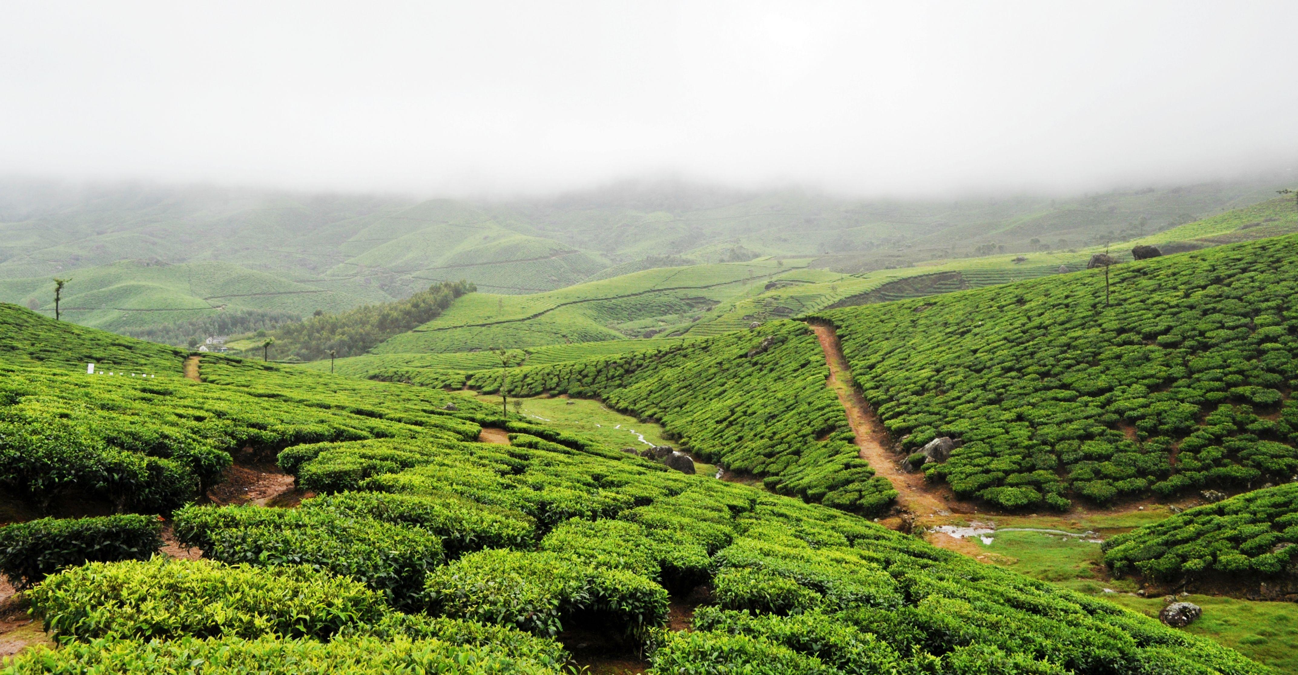 Tea plantations of Munnar, Kerala Travel India
