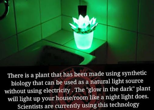 The Glow in the Dark Plant