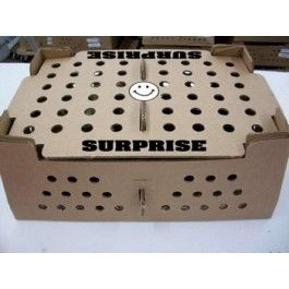 Hatchery Surprise - Baby Chicks for Sale | Cackle Hatchery