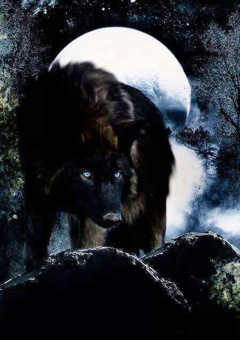 џÊ ╦hї§! Black wolf, Wolf with blue eyes, Wolf spirit animal