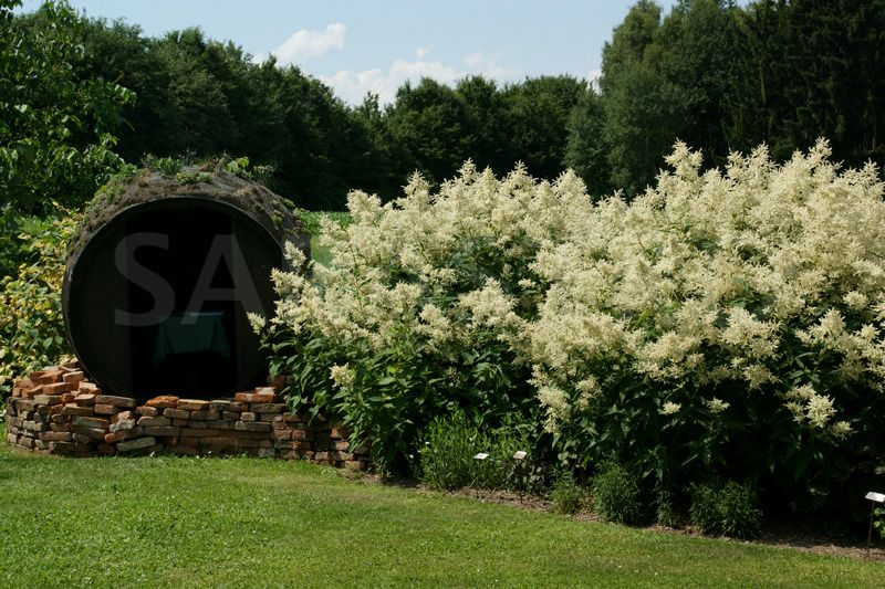 sichtschutz aconogonum speciosum 39 johanniswolke 39 sarastro stauden garten pinterest. Black Bedroom Furniture Sets. Home Design Ideas