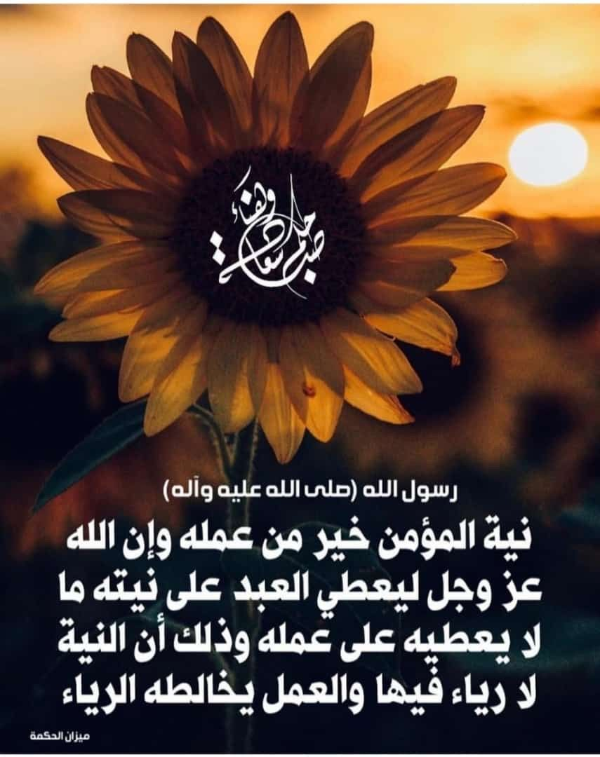 Pin By Ahmed Alabdullah On صباحكم صباح الخير Plants Dandelion Flowers