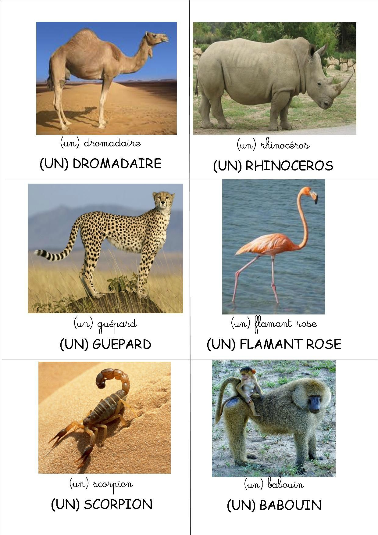 Loto Les Animaux D Afrique Crapouillot Montessori 4 Imagier Animaux Animaux Animaux Dafrique
