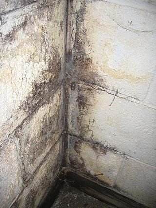 How To Clean Mold Off Basement Concrete Walls Hunker Wet Basement Cleaning Mold Waterproofing Basement