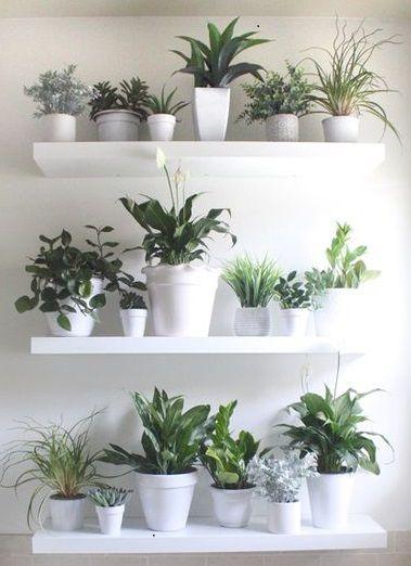 Pin de biljana nikolic en b a l c o n y pinterest - Plantas interior ikea ...