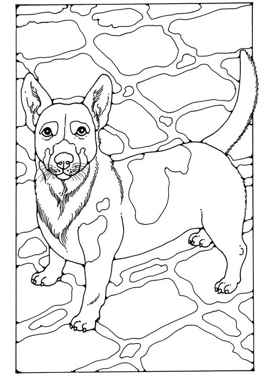 Coloring page Jack Russel | dog | Pinterest