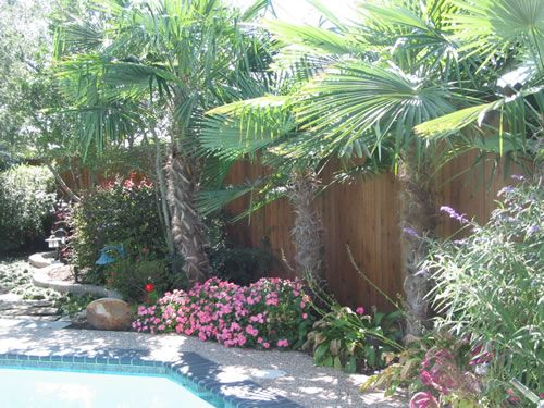 pool landscaping for southlake westlake colleyville flower mound keller texas - Pool Landscaping