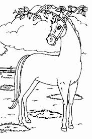 Kleurplaten Paarden En Dolfijnen.Afbeeldingsresultaat Voor Kleurplaten Paarden En Dolfijnen Kleurplaat