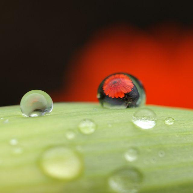 Acqua, risorsa vegetale, animale, umana, accompagna la vita è di tutti il toccasana. Da Capo fonte scorre dai torrenti al mare e dall' acquedotto sgorga in ogni casolare, custodita anche nei pozzi,...