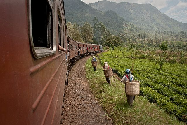 Tren para Ella, Sri Lanka.