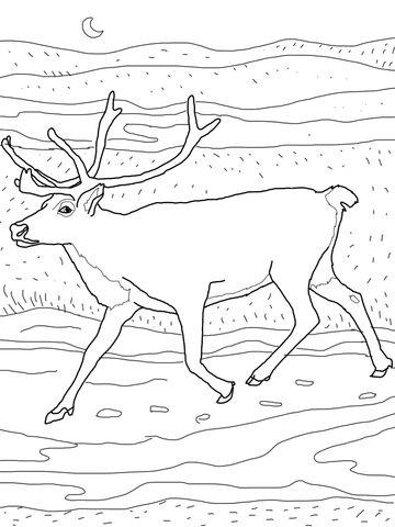 Caribou Coloring Page Fargeleggingsark Papirdukke Fargelegging