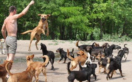 Watch 450 Dogs Run In A Giant Pack At Word S Most Incredible Sanctuary Homeless Dogs Dogs Rescue Dogs