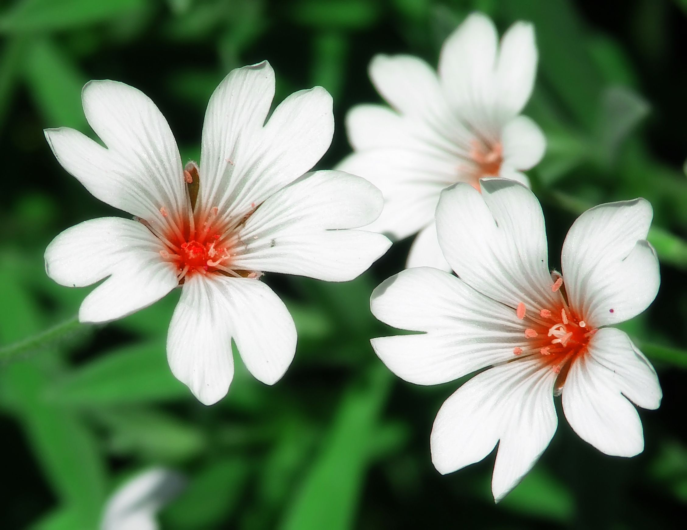 Garden flowers names - 100 Types Of The Most Beautiful White Flowers For Your Garden