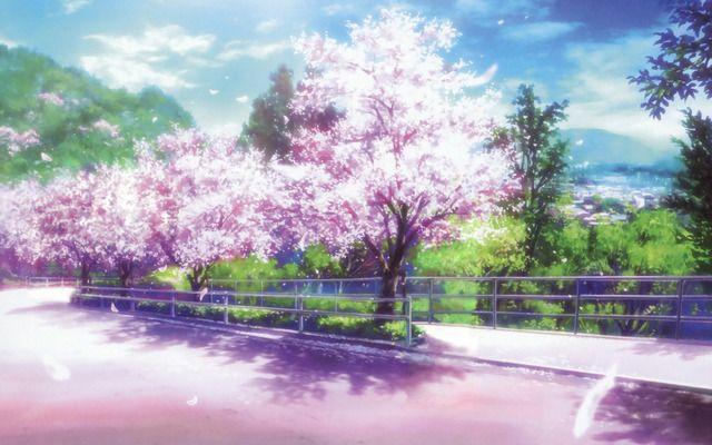 Cherry Blossom Tree Park Clannad Anime Scenery Anime Background