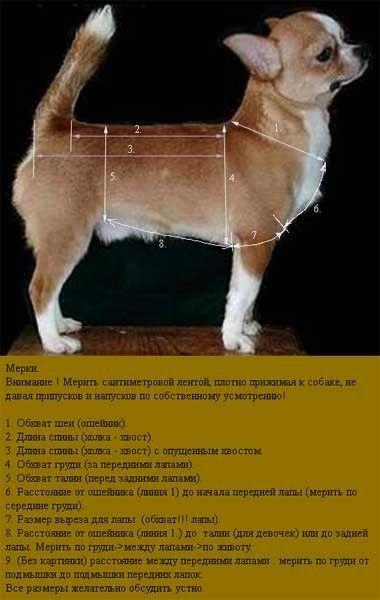 одеваем собак выкройки для вязаной одежды обсуждение на