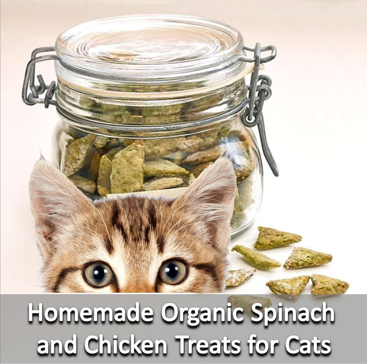 DIY Organic Spinach and Chicken Treats for Cats (With