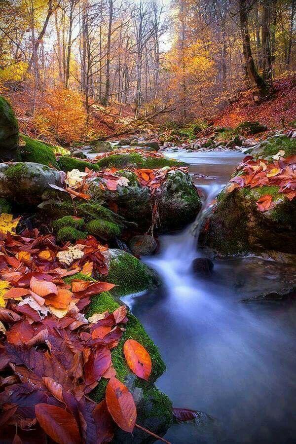 Pin by Naikbidyutprabha on Seasons' Beauty   Beautiful nature pictures ...