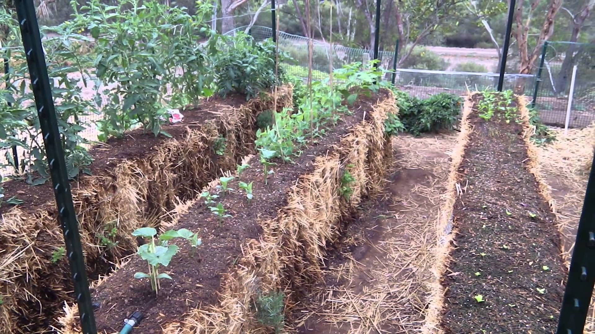 a891d1ea6684b712ebce11249359bc34 - Straw Bale Vs Hay Bale Gardening
